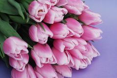 Pink Tulips bouquet, over Purple Background with copy space. Top view. flat Lay. Spring time. Royalty Free Stock Images