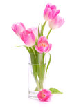 Pink tulips bouquet in vase isolated on white background Royalty Free Stock Photo