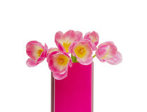 Pink tulips bouquet in vase isolated on white background Royalty Free Stock Photos