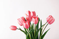 Pink tulips. Bouquet of pink tulips on white background Stock Photos