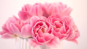 Pink tulips bouquet on a white background stock footage