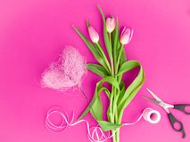 Pink tulips on a pink background royalty free stock image