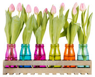 Pink tulips in colorful vases Stock Image