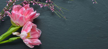 Pink tulips crooked Royalty Free Stock Photo
