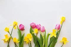 Tulips and daffodils are bright on a white background. Pink tulips and daffodils yellow bright fresh in a bouquet on a white background Stock Photography