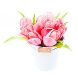 Pink tulips Stock Photo
