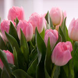 Pink tulips. Delicate bouquet of pink tulips Royalty Free Stock Photos