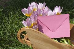 Pink tulips with envelope. Pink baby tulips with envelope (copy space Stock Photos