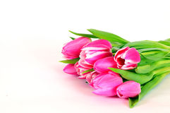Pink Tulips flowers Stock Photo