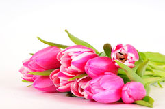 Pink Tulips flowers Royalty Free Stock Photos
