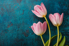 Pink tulips flowers Stock Image