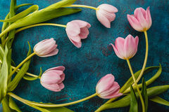 Pink tulips flowers Stock Images