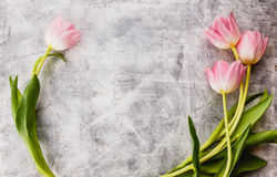 Pink tulips flowers Royalty Free Stock Photography