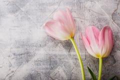 Pink tulips flowers Stock Photo