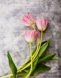 Pink tulips flowers Royalty Free Stock Image