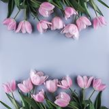 Pink tulips flowers on blue background. Waiting for spring. Greeting card or wedding invitation. Flat lay, top view, copy space stock images