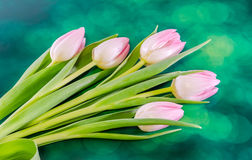 Pink tulips flowers, genus Tulipa, family Liliaceae with heart shape gift box on green bokeh background, close up Stock Photo
