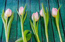 Pink tulips flowers, genus Tulipa, family Liliaceae with heart shape gift box on green bokeh background, close up Stock Photography