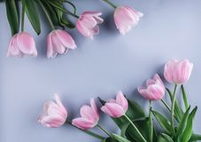 Pink tulips flowers over light blue background. Greeting card or wedding invitation. Flat lay, top view, copy space stock image