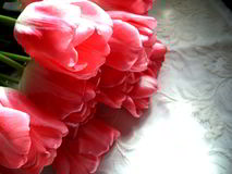 Pink tulips. Flowers, spring, summer stock photos