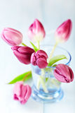 Pink Tulips in a Glass Vase Stock Image