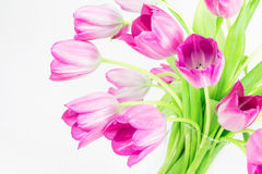 Pink tulips in glass vase Royalty Free Stock Photos