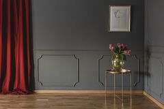 Pink tulips on a golden table in the corner of a luxurious inter. Ior with molding on dark gray walls and bright red curtains. Real photo stock photography