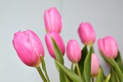 Pink tulips, mother's day. Pink tulips with textspace Royalty Free Stock Photo