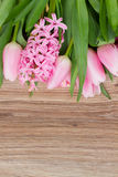 Pink tulips and hyacinth flowers Stock Image