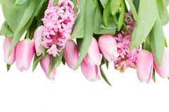 Pink tulips and hyacinth flowers on white Stock Image