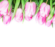 Pink tulips isolated Royalty Free Stock Photos