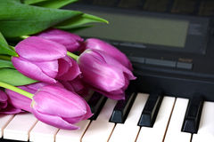 Pink tulips are on the keyboard synthesizer or piano Royalty Free Stock Photos