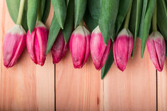 Pink tulips with leaves Stock Images