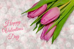 Pink tulips on light background - valentines day.  royalty free stock photography