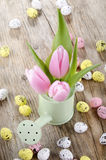 Pink tulips in a light green watering can Royalty Free Stock Photography
