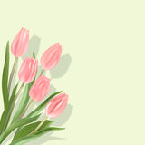 Pink tulips. Light pink tulips on a light green background. Spring flowers with shadow Royalty Free Stock Photos