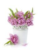 Pink tulips in metal flowerpot Stock Image
