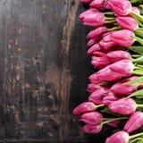 Pink tulips Stock Image