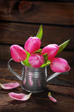 Pink tulips in old metal watering can Stock Photography
