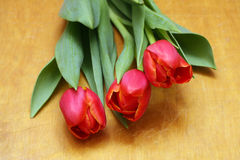 Pink tulips on old vintage wood Stock Photography