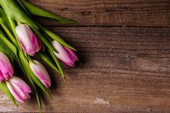 Pink tulips; on old wooden background. Bouquet of; pink tulips flowers on old wooden background; flat lay; copy space Stock Images