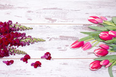 Pink tulips over shabby white wooden table. Pink tulips and Snapdragon flowers over shabby white wooden table, with space for text Royalty Free Stock Photos