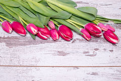 Pink tulips over shabby white wooden table. With space for text Stock Image