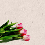Pink Tulips On Paper Stock Photography