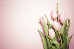 Pink tulips on the pink background. Flat lay, top view.  Valenti Stock Images