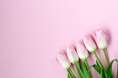 Pink tulips on the pink background. Flat lay, top view. Valentines background Royalty Free Stock Image