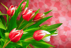 Pink tulips on pink background Royalty Free Stock Photos