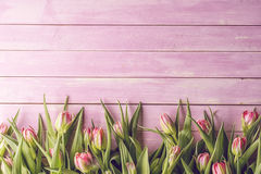 Pink tulips on pink wooden background, happy easter, springtime.  stock photos