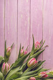 Pink tulips on pink wooden background, happy easter, springtime royalty free stock images