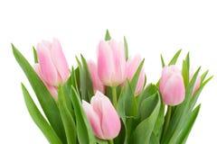 Pink   tulips posy close up Stock Photos